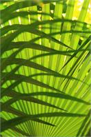 Palm Frond Layers Landscape Abstract St John Virgin Islands National Park Photograph By Roupen Baker