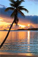 Palm Tree And Tropical Harbor Sunset St Thomas Photograph By Roupen Baker