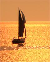 Sailing On Shimmering Gold X