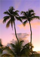 Twin Palm Trees Backlit In Evening Sky St Thomas Photograph By Roupen Baker