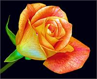 Floral Pastel 3