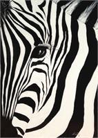 The Zebra With One Eye
