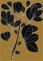 Wild Prune - Pouteria Sericea As Greeting Card