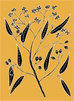 Bloodwood - Eucalyptus Polycarpa As Greeting Card