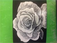 Rose Scratchboard