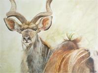 Kudu As Framed Poster