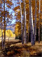 Autumn Paint, Chama, NM