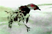 Korean Bird As Framed Poster