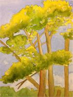 Golden Gate Trees As Greeting Card
