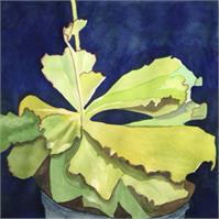 Succulent I