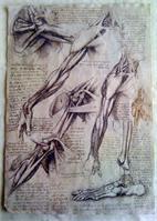 Leonardo Da Vinci - Arms