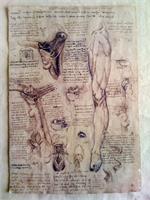 Leonardo Da Vinci - Leg