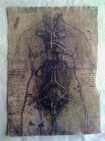 Leonardo Da Vinci - Internal Organs 1