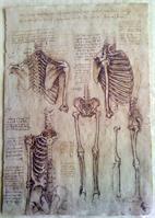 Leonardo Da Vinci - Skeleton