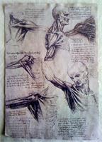 Leonardo Da Vinci - Tendons