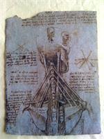 Leonardo Da Vinci - Skull