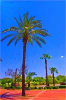Palm Trees By The Lake
