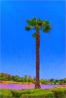 Palm Tree By The Lake