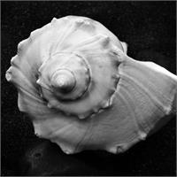 Shell No 6 Picture
