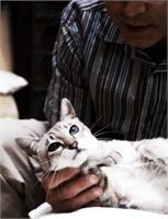 Tender Cat