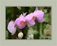 Orchid With Digital Mat