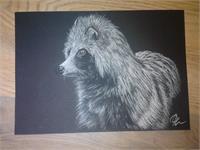 Racoon On Black Paper Pastel