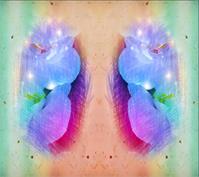 Harmonious Symmetry