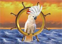 Cockatoo Of The Sea