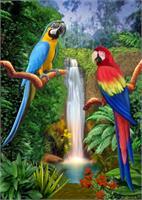 Macaw Tropical Parrots