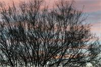 Pastel Tree