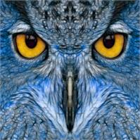 Blue Owl As Poster