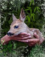 Protect Animals