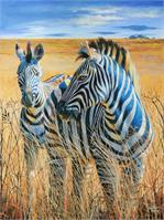 Zebras In The Grass As Poster