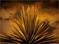 Yucca Sky Retouched Flatened 920x690