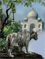 White Tiger Guardien Of The Taj Mahal