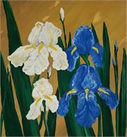 Irises As Framed Poster