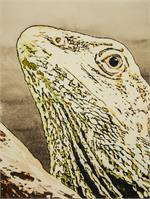 Face Of Lizard