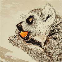 Lemur Eating Fruit