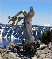 Crater Lake_ Little Bird On Dry 3 As Framed Poster