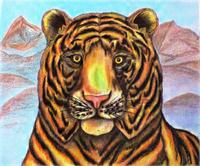 Bengaled Tiger Original Drawing As Greeting Card