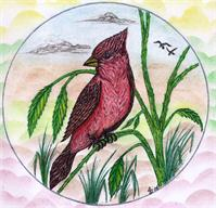 The Beautiful Red Cardinal Original Drawing