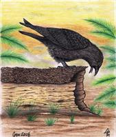 The Curious Crow In Full Color Mixed Media Drawing