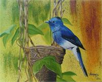 Mavi Kus(blue Bird)