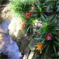 Queen Elizabeth - Exotic Plants