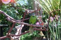 Waving Birdie