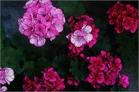 Detail Flowers
