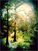Light Shining On Swamp