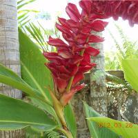 St Kitts Gardens