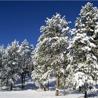 Snow Scene In South Dakota