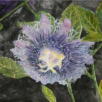 Pretty Purple Passion Flower